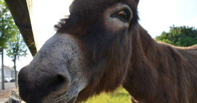 Ein Esel ... für unsere heutige Eselsbrücke zum Anforderungsmanagement