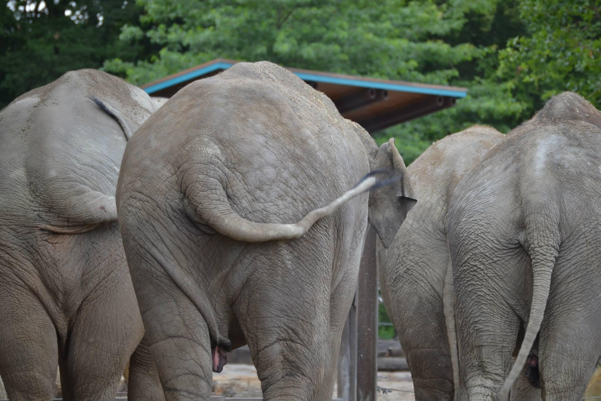Elefanten, die einem den Rücken zuwenden