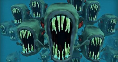 Piranhas mit aufgerissenen Mäulern